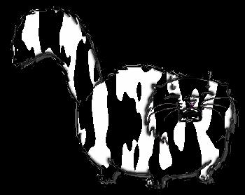 курсы по созданию сайтов спб, курсы по созданию сайтов москва, курсы по созданию сайтов начинающим, курсы по созданию сайтов онлайн, курсы по созданию сайтов ростов, курсы по созданию сайтов с нуля, курсы по созданию сайтов недорого, картинка толстый кот