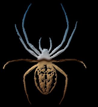 паук крестоносец картинка фото логотип аватар скачать табличка